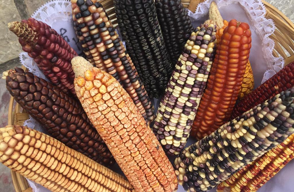 Declaratoria del Espacio Estatal en defensa del maíz nativo de Oaxaca.