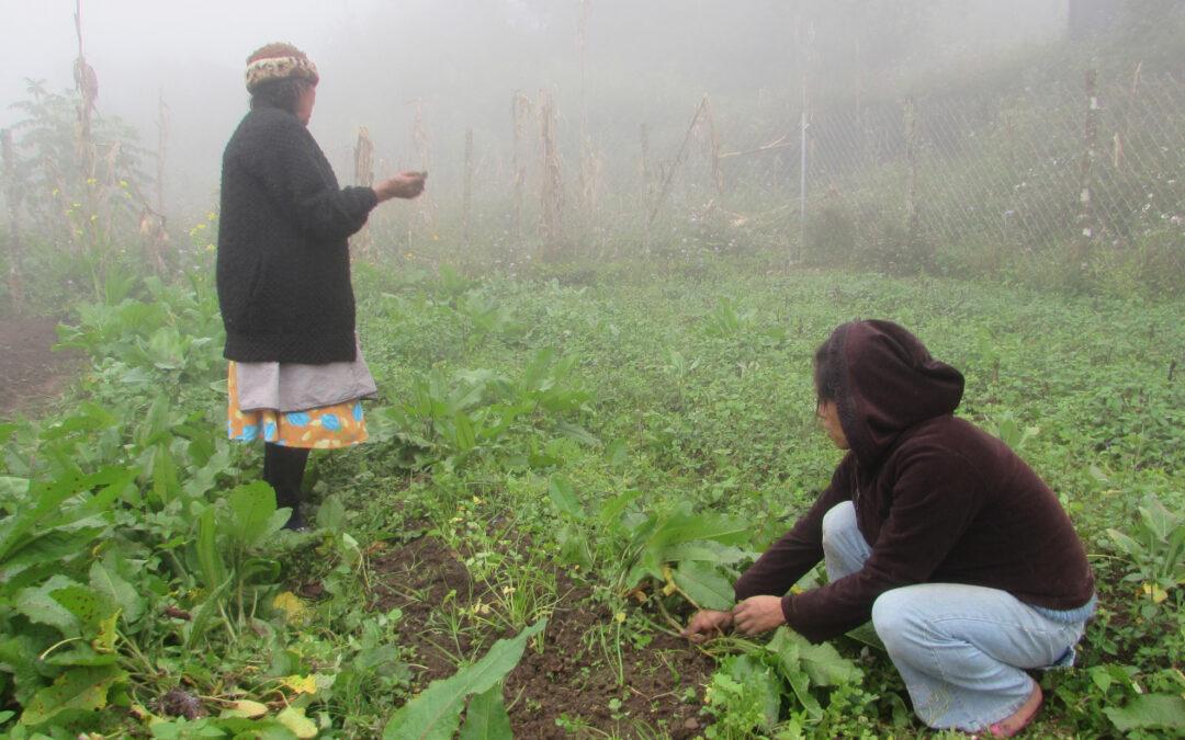 Matilde mujer ayöok de Moctum nos invita a cultivar la tierra con respeto y agradecimiento