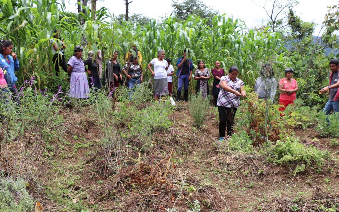 La agroecología fortalece la salud y autonomía alimentaria de familias en comunidades mixes, en tiempo de pandemia